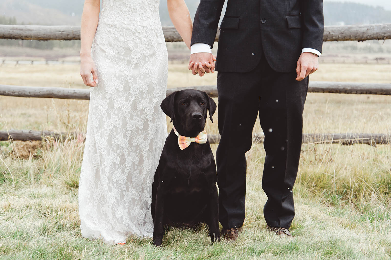 Bride groom and dog wedding photo